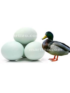 Duck Egg copy