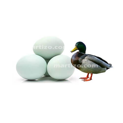 Duck Egg copy